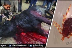 Halal-Meat-(Sacrificial-Animals)-Found-to-Be-Carrying-Hemorrhagic-Congo-Virus