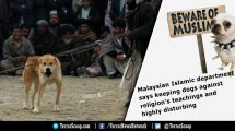Malaysian-Islamic-department-says-keeping-dogs-against-religion's-teachings-and-highly-disturbing